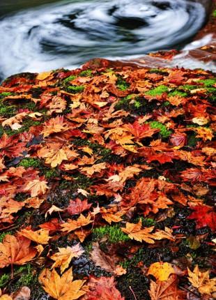 autumn023