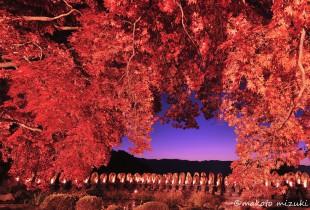 autumn025