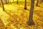autumn034