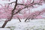 spring016