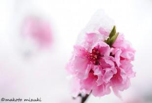 spring017
