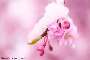 spring018