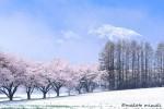 spring019